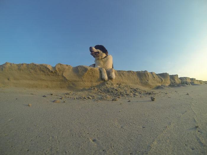 Perro San Bernardo acostado sobre un montón de arena