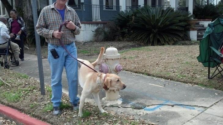 Persona que lleva un perro atado a una cadena donde esta orinando a su dueño
