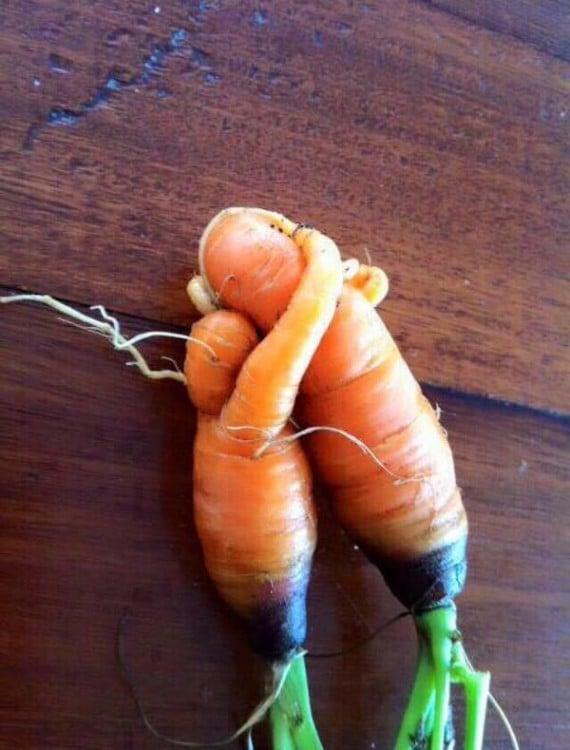 dos zanahorias que parece que estan abrazadas