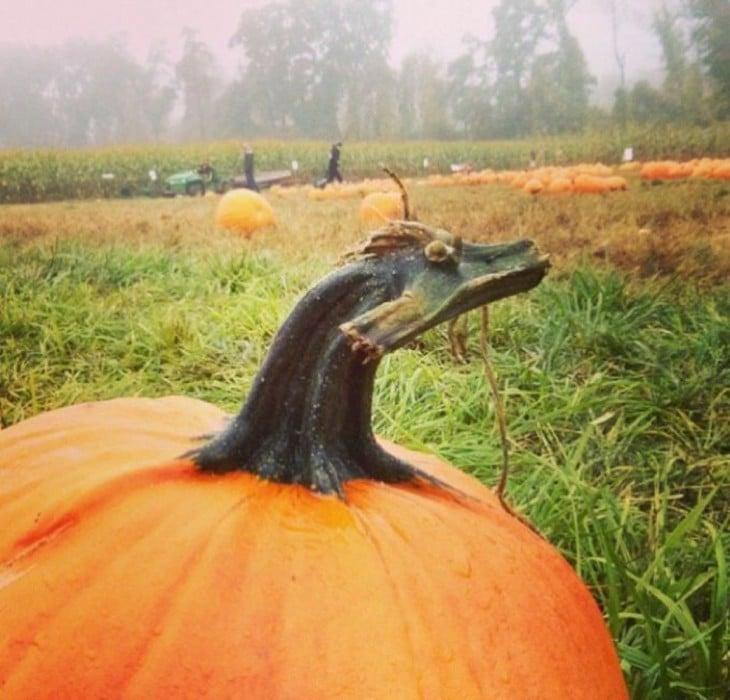 Calabaza con una cara de dragón en la punta