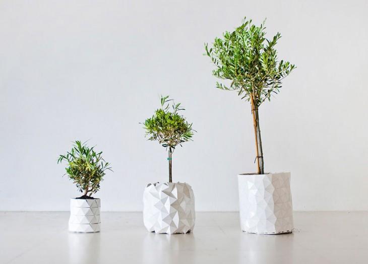 Evolución y crecimiento de una planta dentro de una maceta
