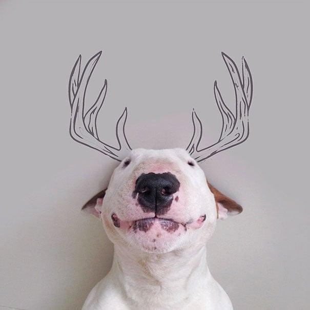 cara de un bull terrier con cuernos