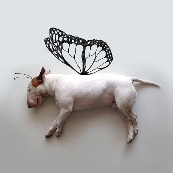 Perro acostado en el suelo con un dibujo de alas de mariposa
