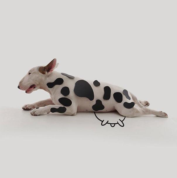 Cachorro con manchas de vaca y un dibujo de ubres debajo de él