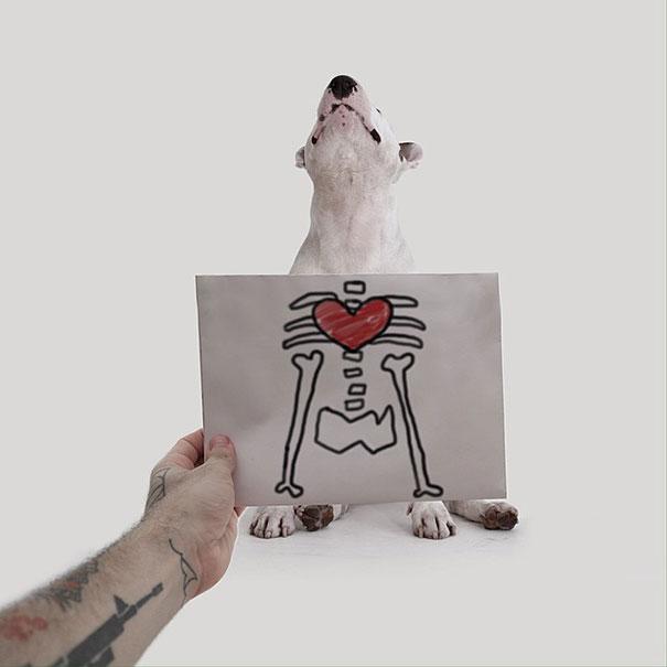 Mano poniendo un dibujo frente a un perro