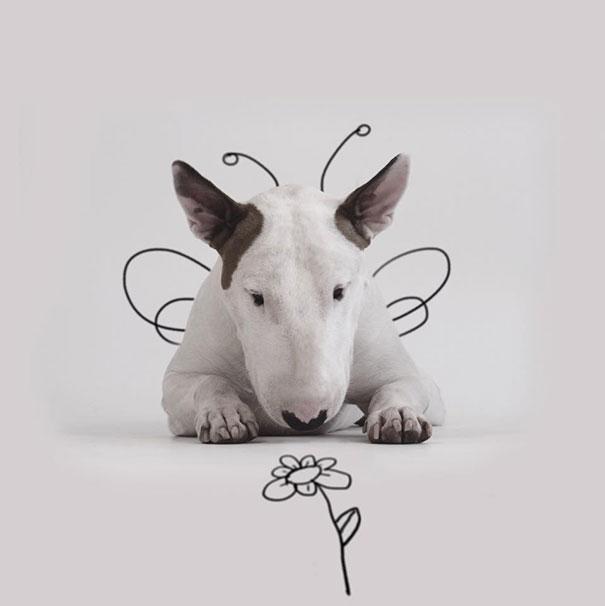Perro bull terrier acostado en el piso con el dibujo de unas alas de mariposa y una flor frente a él