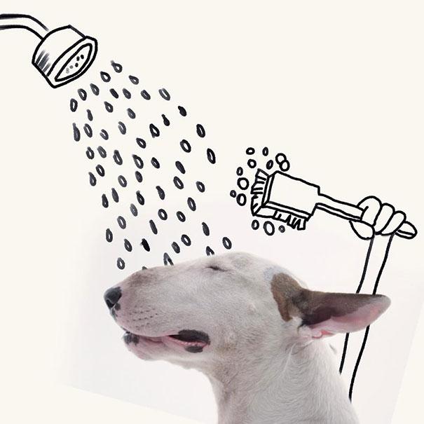 Bull terrier con dibujos que simulan estarse bañando