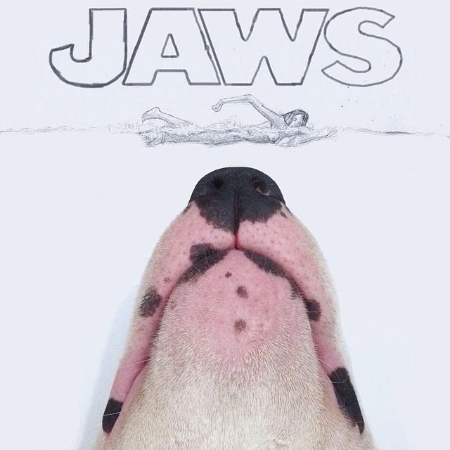 hocico de un perro bull terrier con letras sobre él