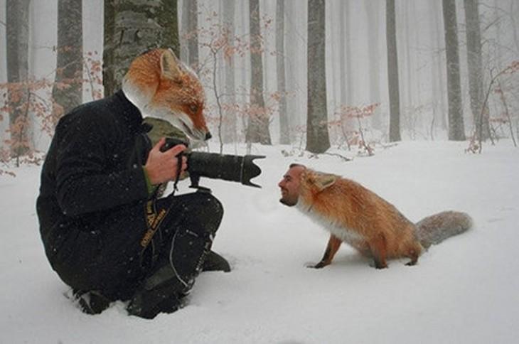 Hombre con cara de zorro tomándole foto a un zorro con cara de hombre