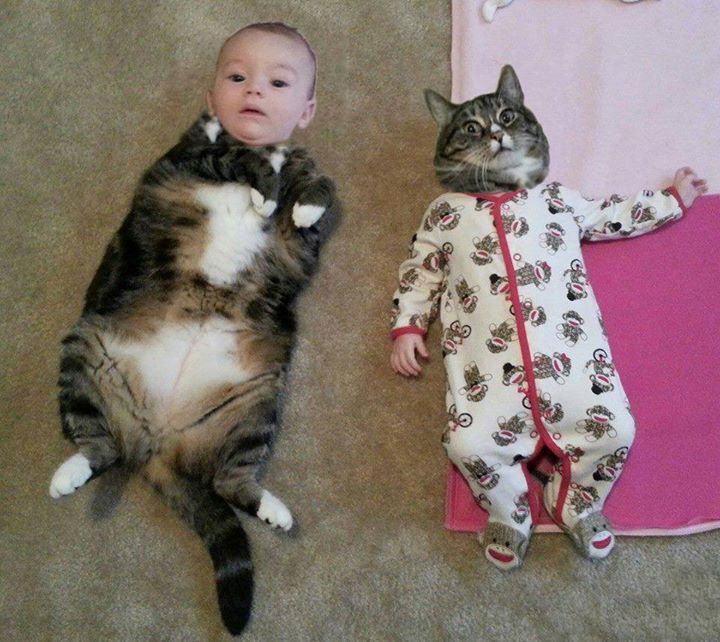 Bebé y un gato acostados en el suelo con las caras intercambiadas