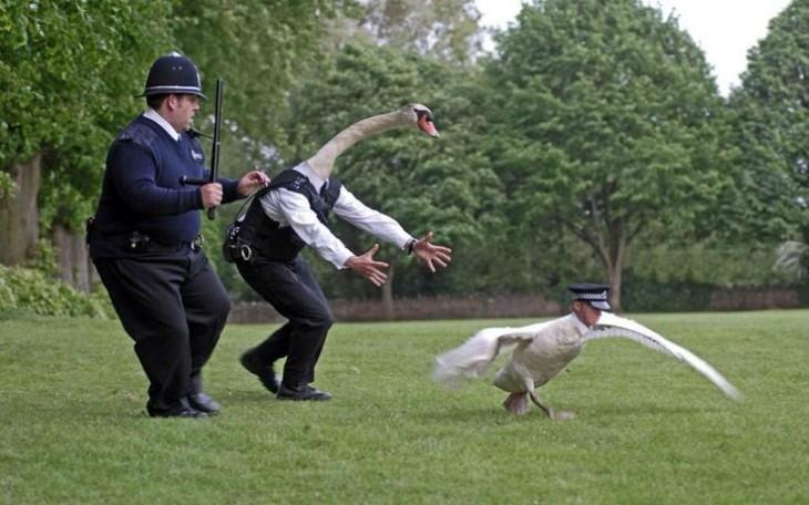 Policía que intercambio su cabeza con la de un ganzo