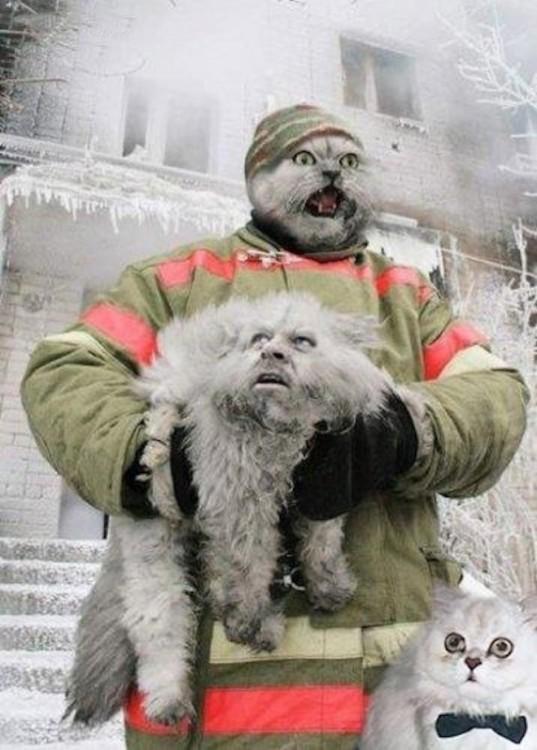 Bombero con cara de gato y gato con cara de bombero
