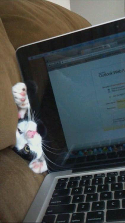 Cabeza de un gato intentando morder una laptop