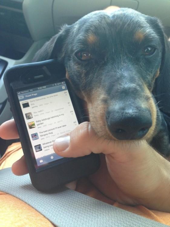 Mano de una persona sosteniendo un celular y la cara de un perro aburrido sobre su muñeca