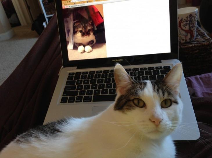 Gato frente a una laptop que tiene de fondo la imagen de un gato