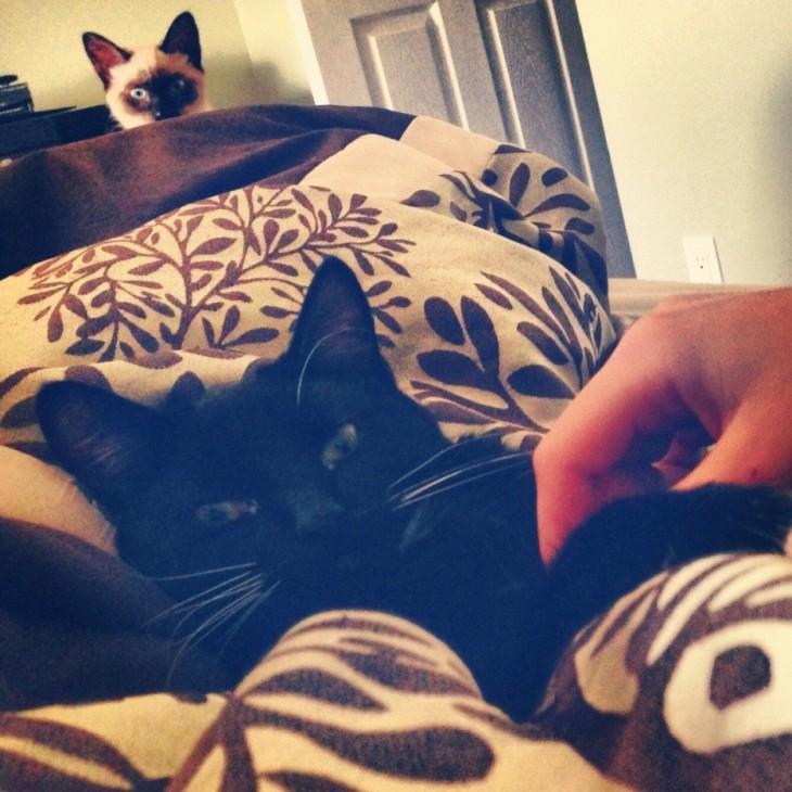 Gato acostado en una cama mientras una mano lo acaricia