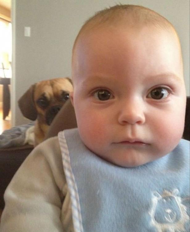 imagen de un bebé que detrás tiene un perro