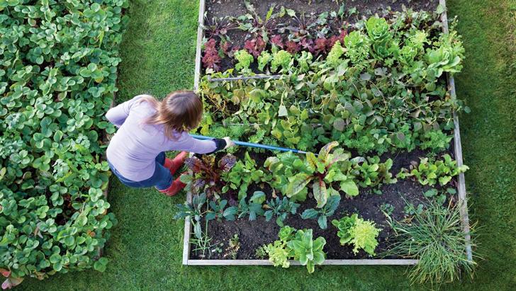 Mujer cuidando los cultivos en el jardín de su casa
