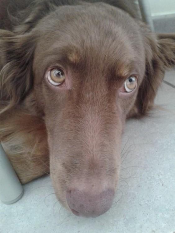Oliverio el perro rescatado (2)