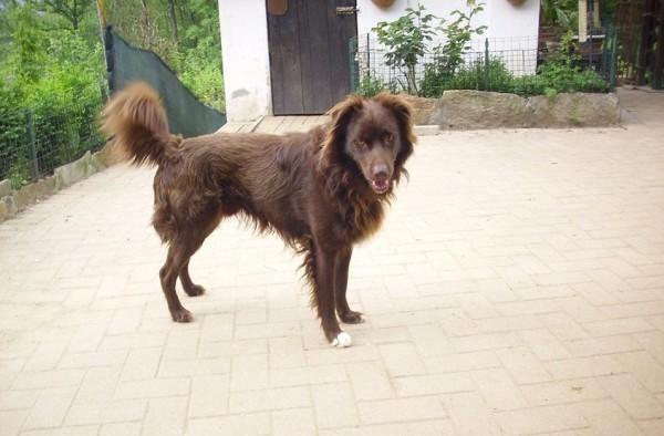 oliverio el perro rescatado ya con más fuerza y vida