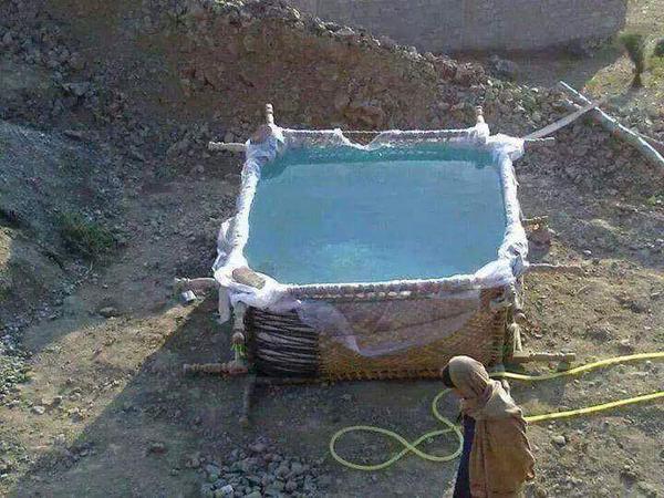 Arabia en una piscina de un cesto
