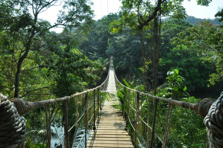 Jungle Bridge en la Isla Roatan, Honduras
