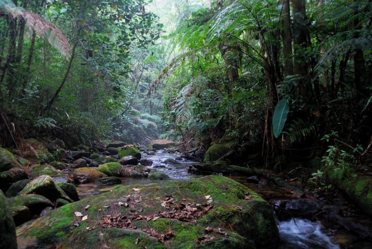 Río Cusuco, Honduras