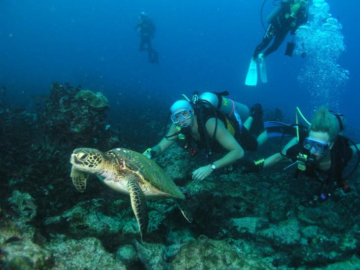 Personas buceando tras una tortuga en el Caribe
