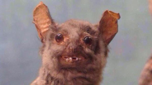 Fotografía que muestra la cara de un ratón