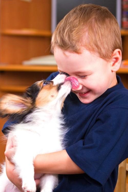 La saliva de tu perro tiene propiedades curativas