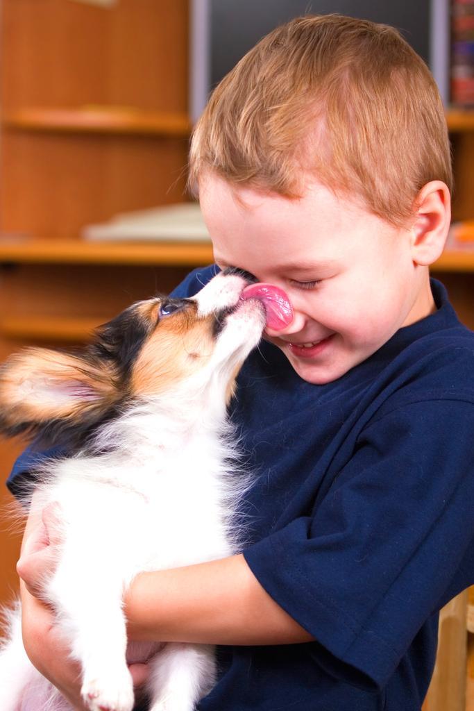 Que causa la saliva de perro