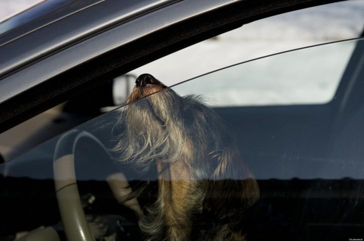 Perro dentro de un auto sacando la nariz por una ventanilla