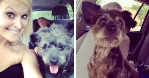 adopto perro que estaba muriendo para que sus iltimos dias fueran memorables