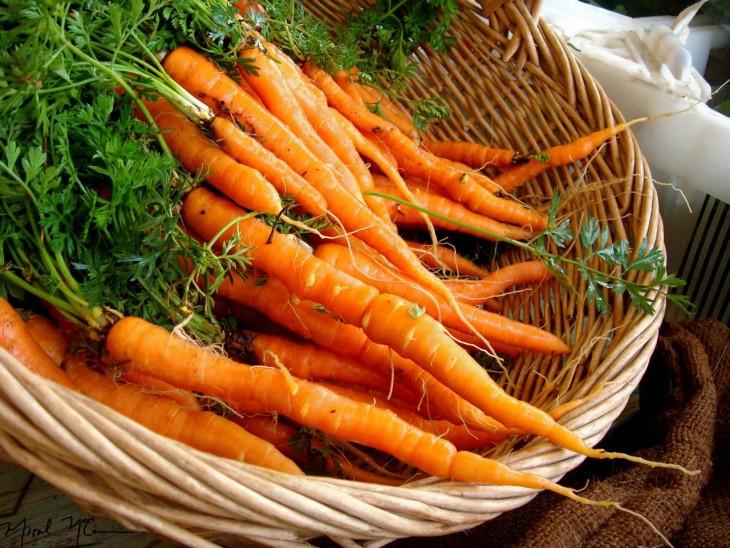 zanahorias de ahora