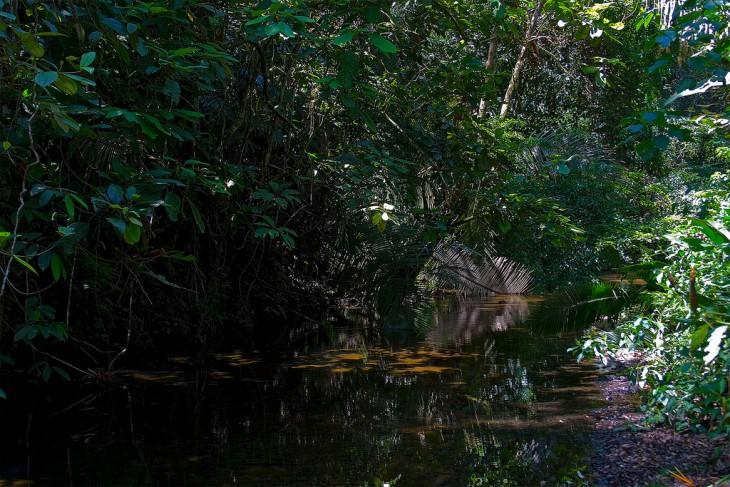reserva natural de belice Cockscomb