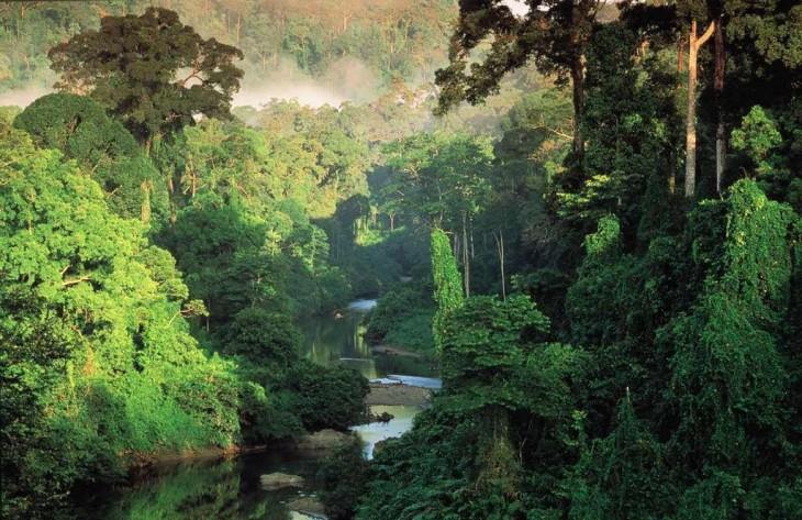 selva tropical de belice forma el 60 por ciento del territorio nacional