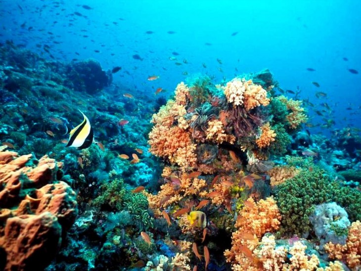 arrecife de coral belice