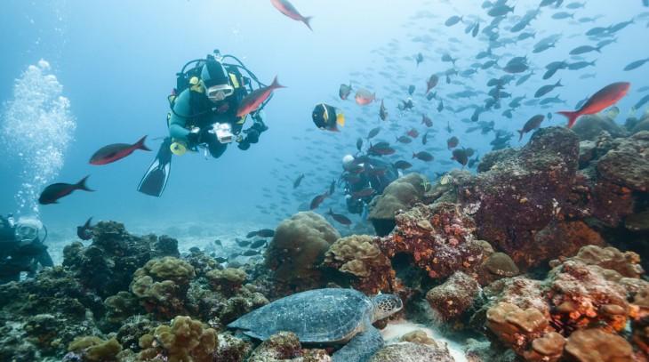 buceo en islas galápagos