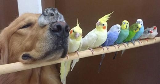 hermosa amistad entre un perro una chinchilla y unos pajaros