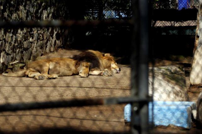 zoologico de los narcos más buscados en mecxico y el mundo