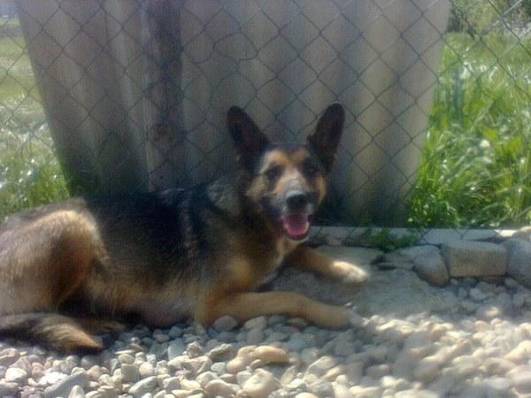 perra ha sido rescatada y vive en un hogar temporal