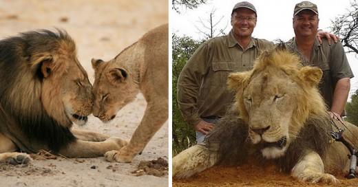 cecil el leon