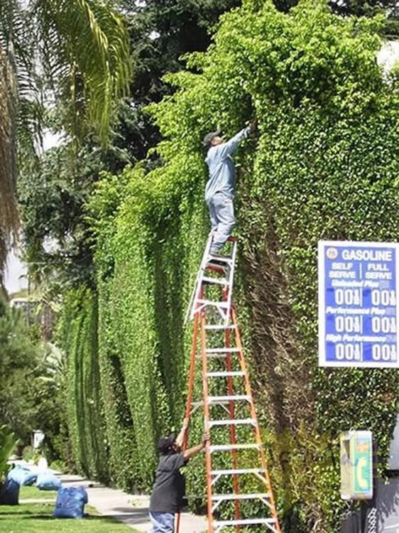 jardineros arreglando el portico