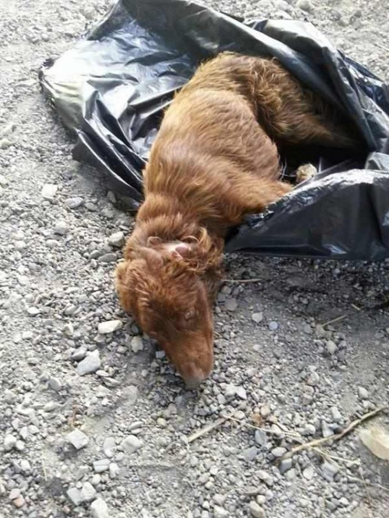 oliverio el perro rescatado