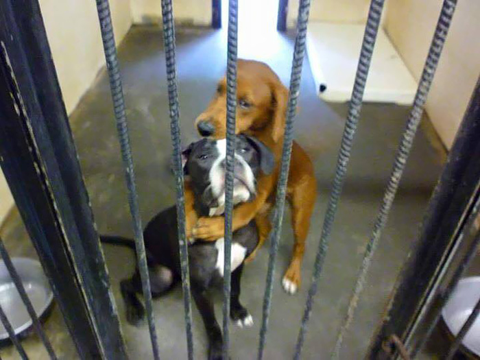 Kala y keira abrazados antes de ser mandadas a la eutanasia