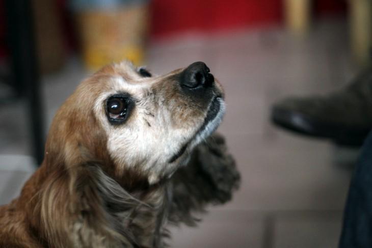 la razón por la que tu perro no recuerda por qué lo regañas