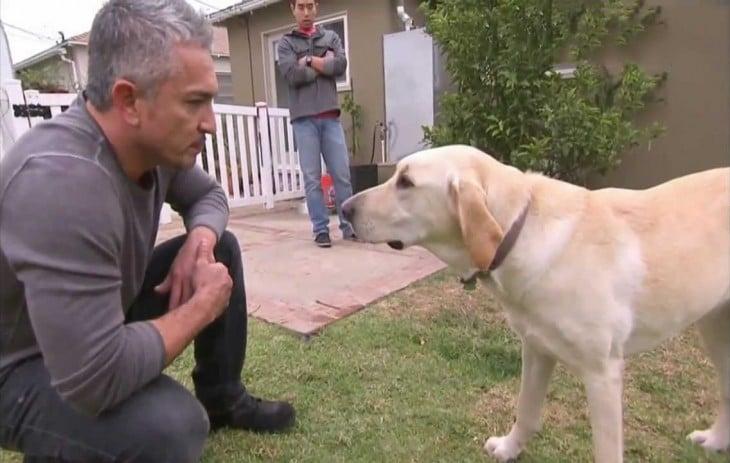 cesar millan tranquilizando perro