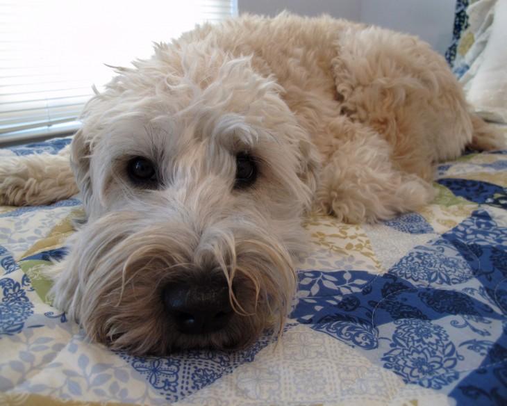 Tu perro sufre cada vez que te vas? Ayúdalo a sentirse mejor