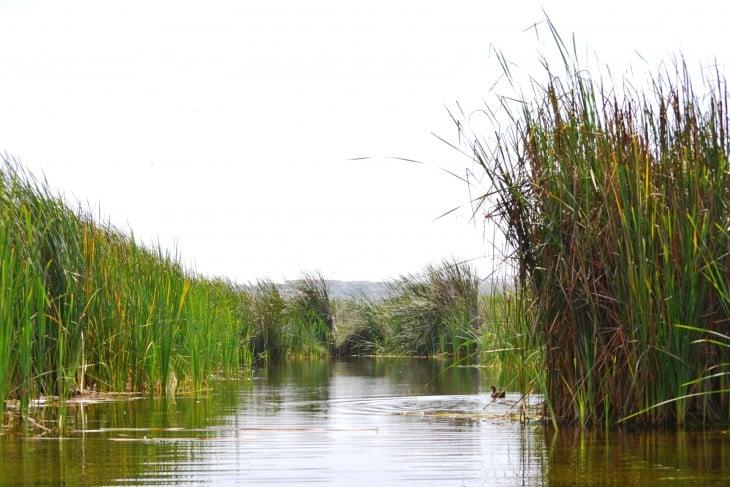 pantanos de villa peru