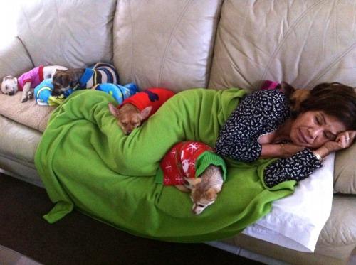 mujer durmiendo rodeada de sus chihuahuas